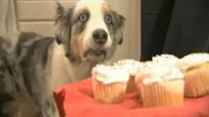 Image showing funny dog 5