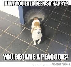 Image showing funny dog 9