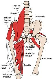 Image showing psoas muscle anatomy