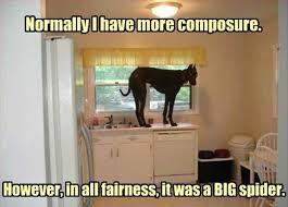 Image showing funny dog 10