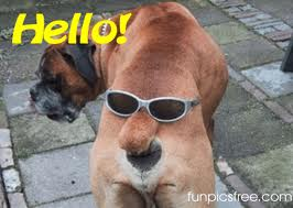 Image showing funny dog 13